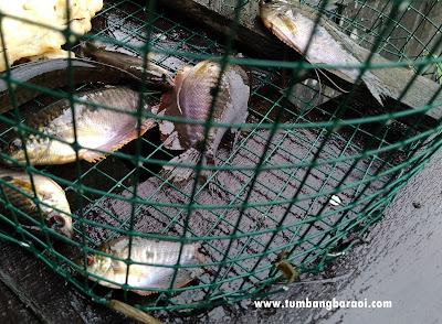 Cara buat perangkap ikan dari kawat loket