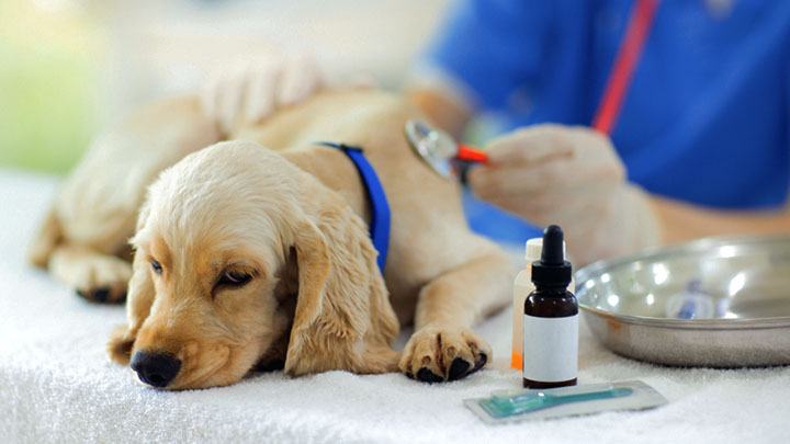 puppy-vaccinations-schedule