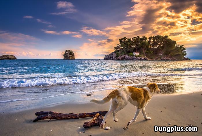 chó trên bãi biển
