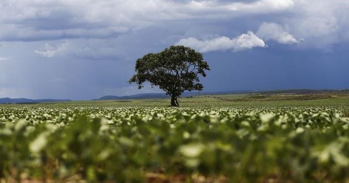 São Desidério volta a ser município com maior valor gerado na agricultura, diz IBGE