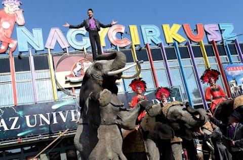 Szeretnénk, hogy európai csúcsintézmény legyen a Nemzeti Cirkuszművészeti Központ