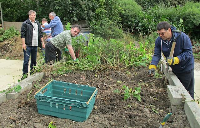 Harvesting The Potatoes, PCP Garden, Pioneering Care Centre Newton Aycliffe