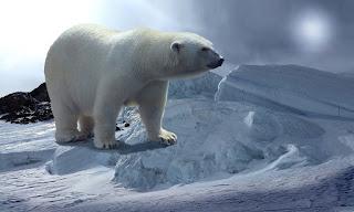पोलर बियर ( Polar bear )