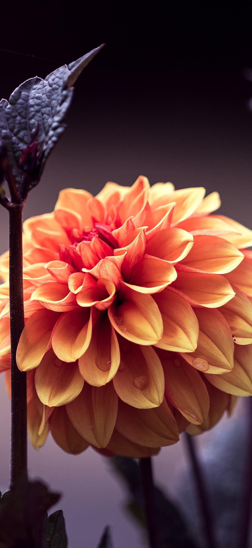 خلفية زهرة برتقالية خلابة
