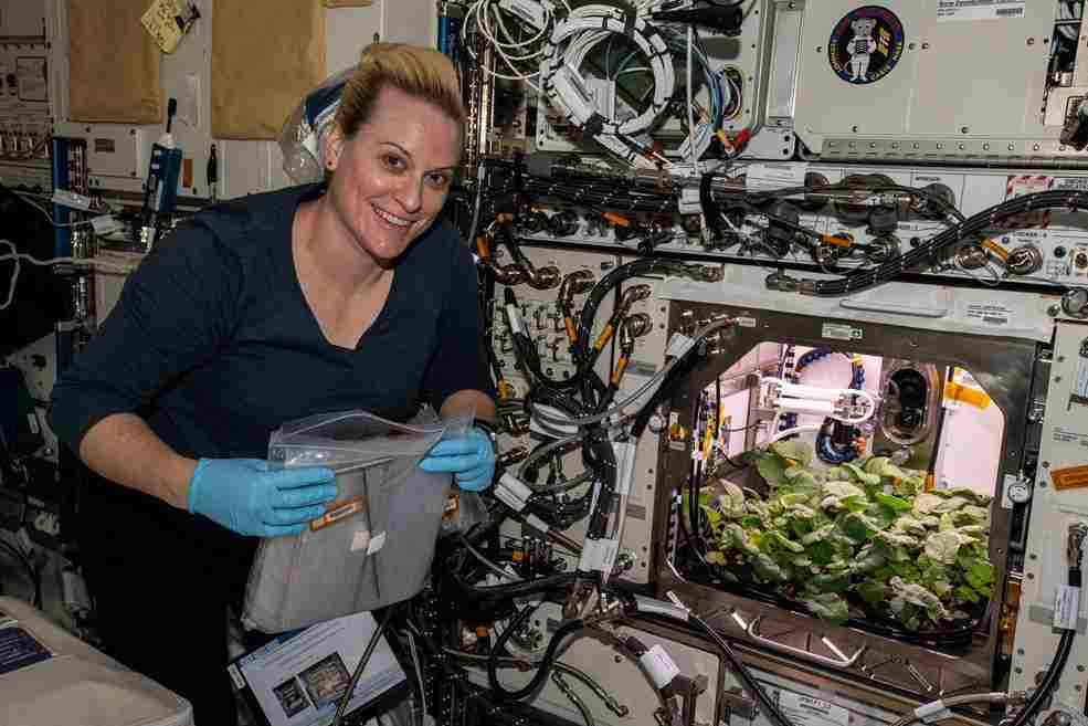 Radish crops harvested on space