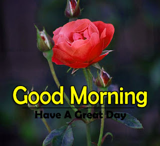 New Good Morning 4k Full HD Images Download For Daily%2B88