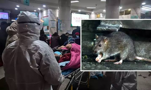 Muncul Virus Baru di China Selain Corona, #Hantavirus Bisa Membunuh dalam Hitungan Jam