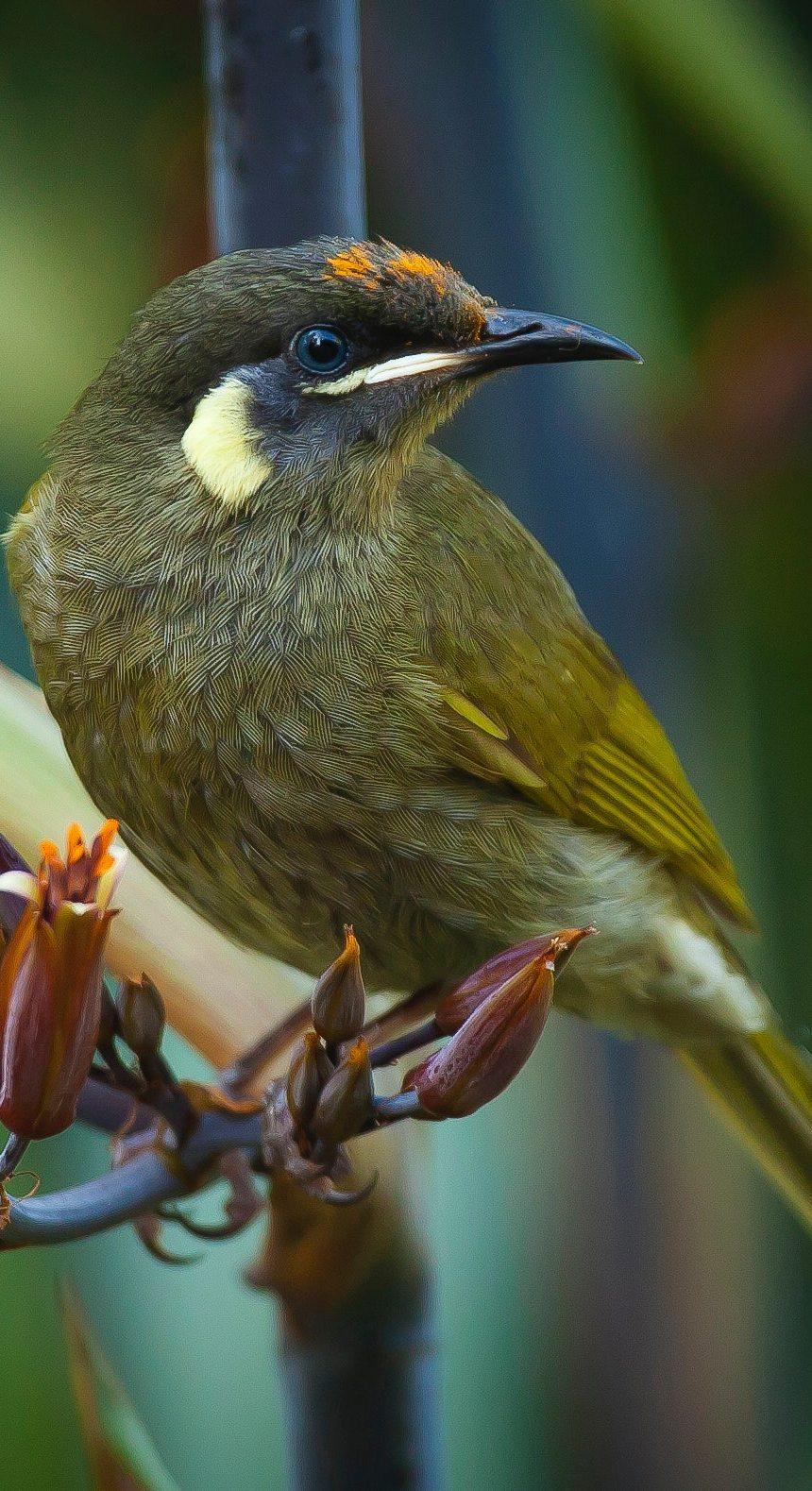 A beautiful green bird.