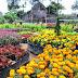 Berfoto dengan Aneka Keindahan Bunga di Kebun Begonia, Lembang