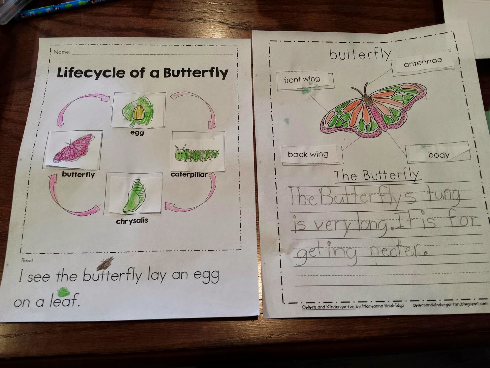 Colors And Kindergarten My Science Journal Bugs