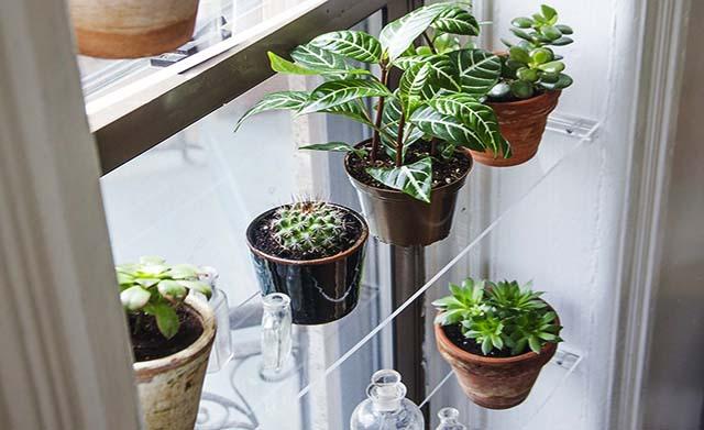 rak tanaman dari bahan akrilik