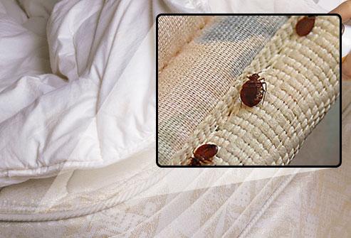 Healthy Life Bedbugs