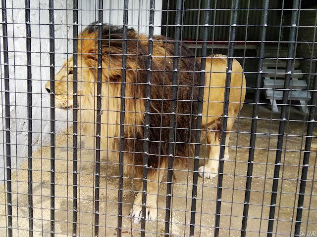 Зоопарк в Луганске 2019