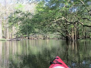 Daves Yak Tales: Chipola River, Batzell Springs, Madison