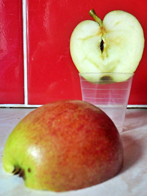 Apple grown from a pip