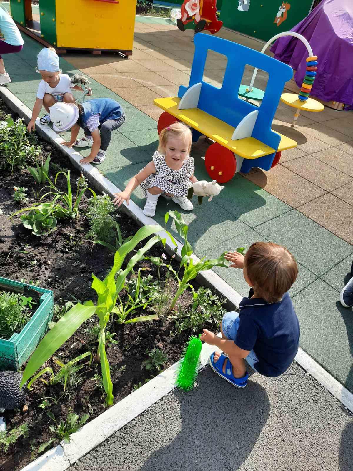 картинка посадили огород посмотрите что растет