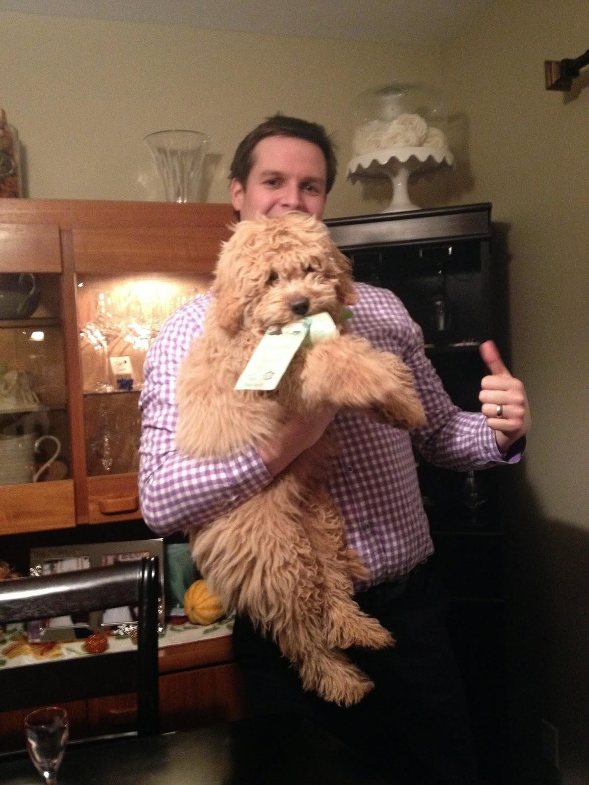 puppy stealing