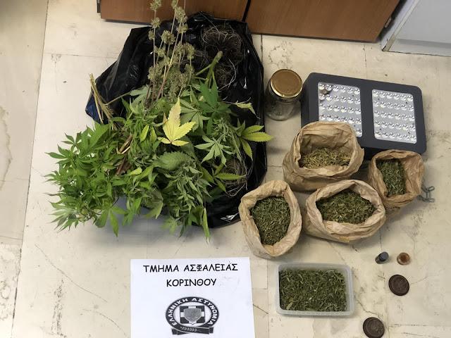 Συλληψη 70χρονου στην Κόρινθο για καλλιέργια κάνναβης - Κατασχέθηκαν 13 δενδρύλλια