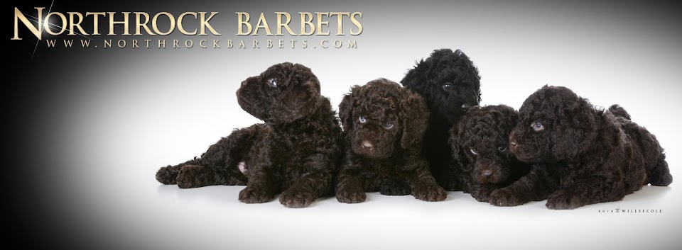 Northrock Barbets: Barks and Woofs