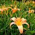 999 More Amazing Flower Photos