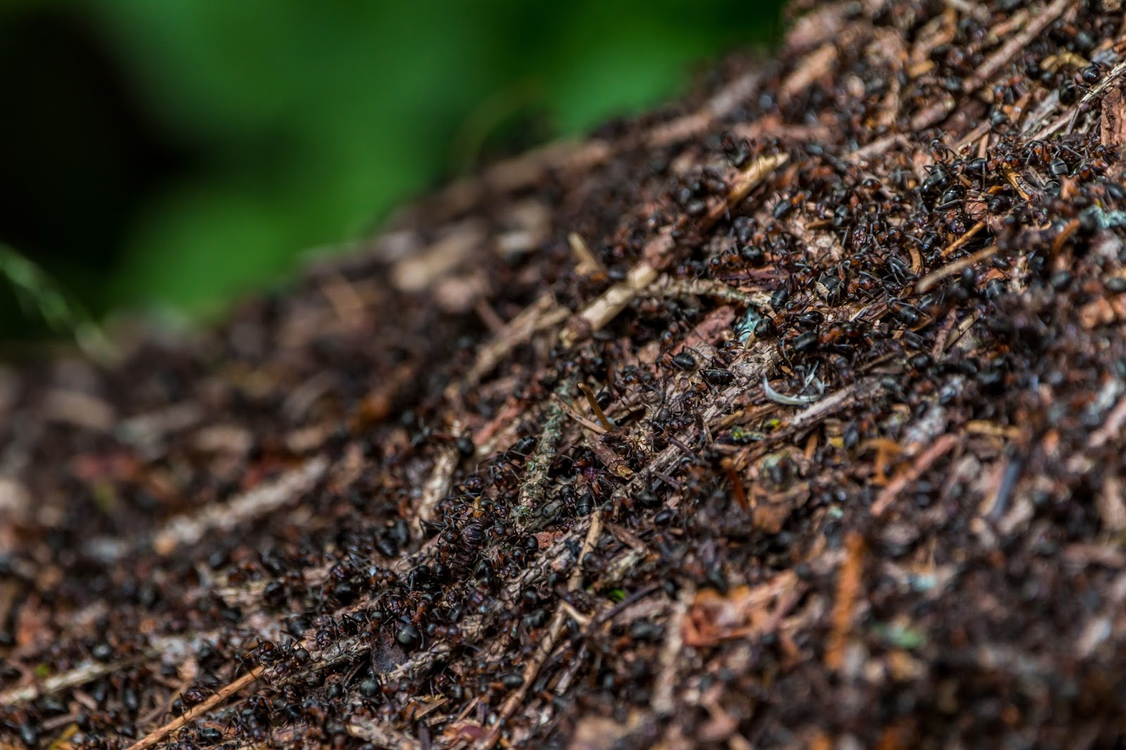 Ants making an anthill.