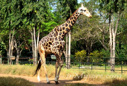 20 Most Popular Zoos In India Bankexamstoday