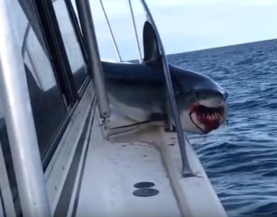 Tubarão pula dentro de barco - Img 1