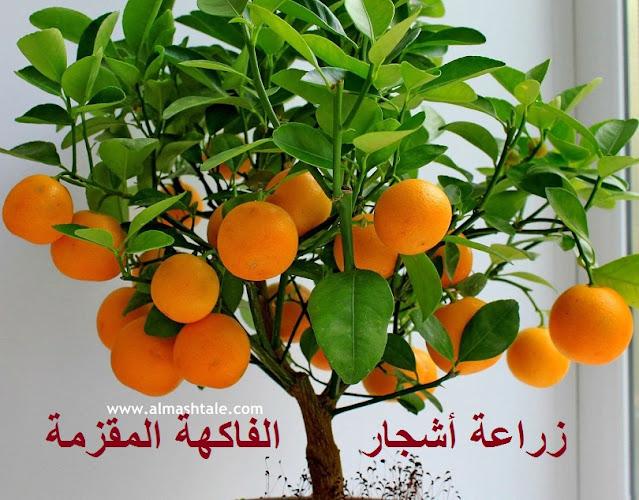 كيفية زراعة أشجار الفاكهة المقزمة؟
