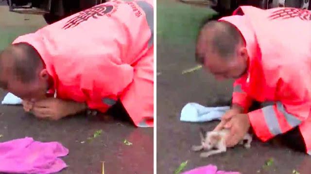 Котёнок захлебнулся под ливнем и чуть не погиб – его спас рабочий, когда едва не стало слишком поздно