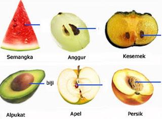 pengertian angiospermae dan gymnospermae,contoh tumbuhan gymnospermae dan angiospermae,ciri ciri tumbuhan angiospermae dan gymnospermae,perbedaan tumbuhan angiospermae dan gimnospermae,