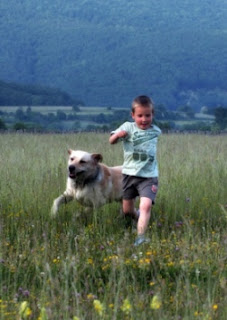 how dogs make babysitting easier and more fun pets cute and docile