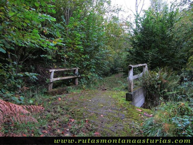 Circular Coañana Saleras: Puente