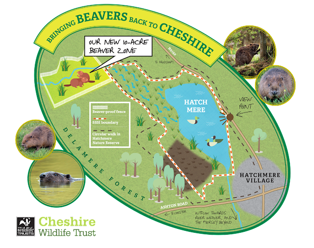 Map of beaver release area