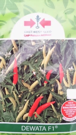 benih petani,tahan virus, buah lebat, cap panah merah, tahan layu, tahan cekaman calcium, dewata F1