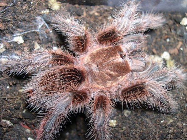 Spiders aren't Scary — Tarantulas