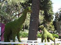 Mama and baby giraffe topiaries, Festival of Flowers - Christchurch Botanic Gardens, New Zealand