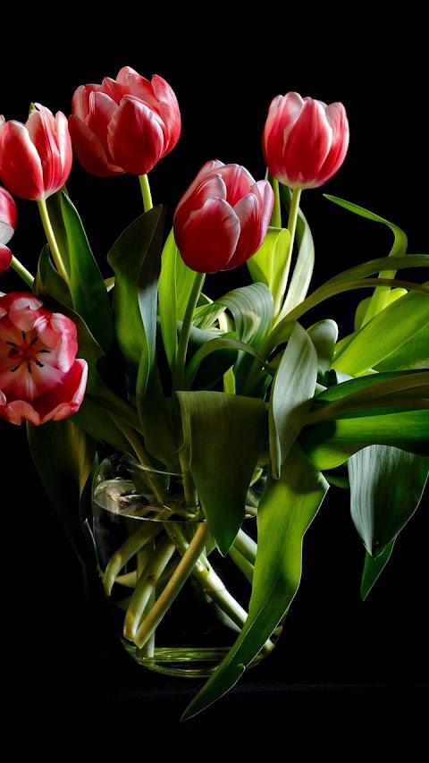 Lọ hoa Tulip đẹp