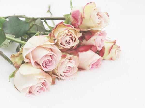 De reden dat ik altijd bloemen in huis heb