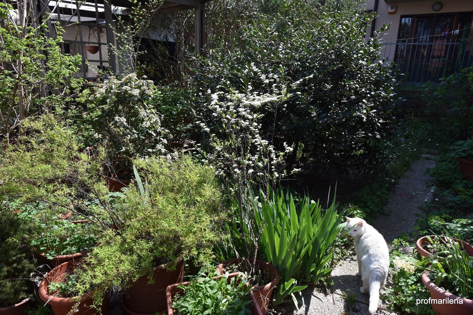 Piante Da Giardino Ombroso appunti verdi