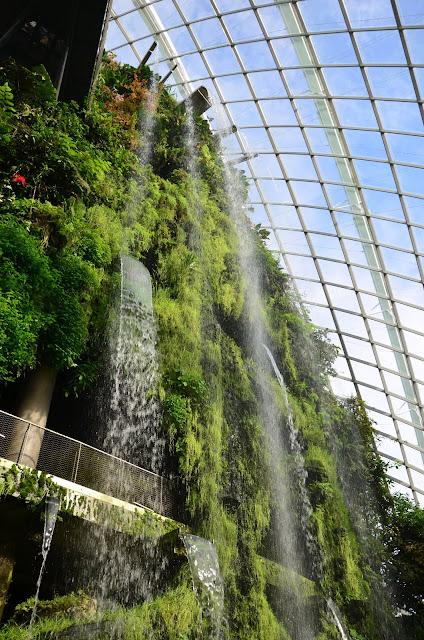 Las Deszczowy - Cloud Forest Dome - Singapur