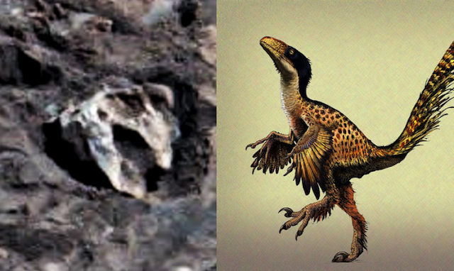 UFO SIGHTINGS DAILY: Ancient Skull Linked To Birds And