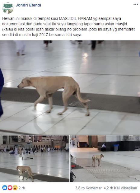 Video: Anjing Liar Berkeliaran di Sekitar Masjidil Haram