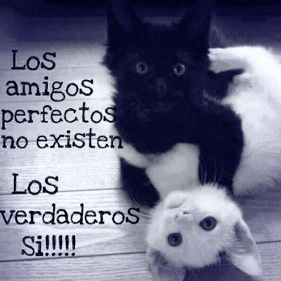 Imagenes Con Mensajes Sobre Los Amigos Verdaderos...