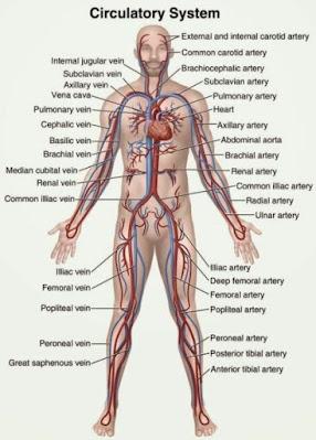 Efek dan manfaat pijat suatu tinjauan anatomis pijat