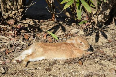 大久野島, 兔仔島, 兔子島