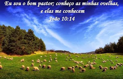 Resultado de imagem para JOAO BIBLIA EVANGELICA