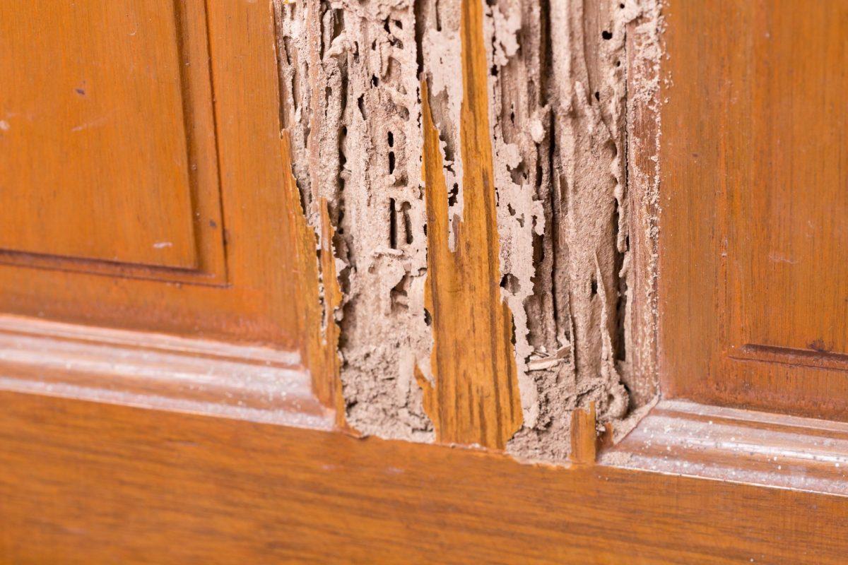 panduan cara membasmi rayap di pintu kayu