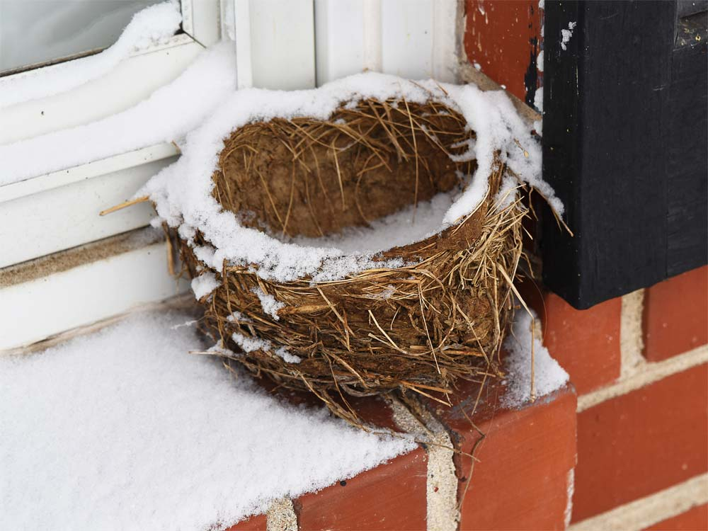 Bird Nest with Snow