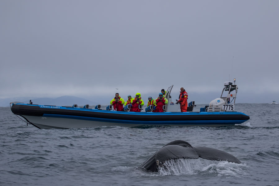 Barco para ver ballenas en Islandia