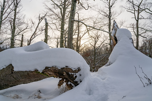 Winterwandern in Bad Harzburg | Kleiner und Großer Burgberg und Besinnungsweg | Baumschwebebahn | Wandern im Harz 09
